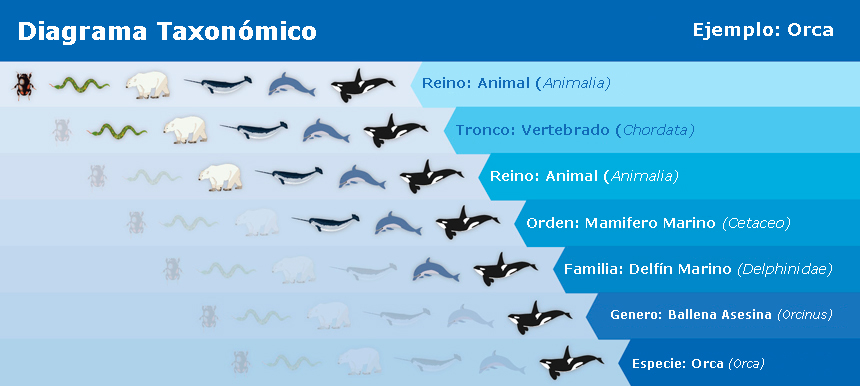 Galapagos Graphics: Orcinus orca